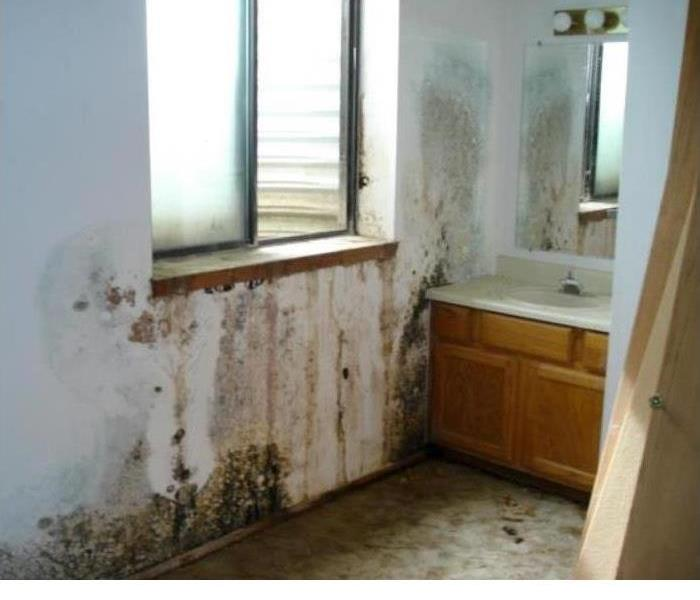Mold Remediation SERVPRO of W. St. Joseph County: Understanding the Mold Remediation Process